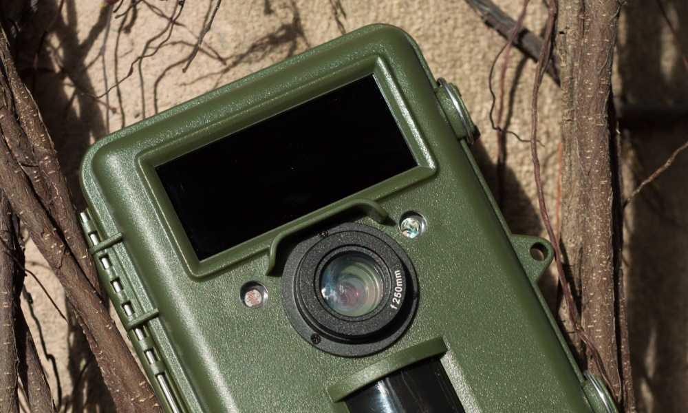 How to View Trail Camera Photos